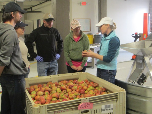 "Courtney, in the process of training staff on identifying the parts of the apple that should be cut out, was giving a tutorial on ""stink bugs"" and the markings they leave on apples."